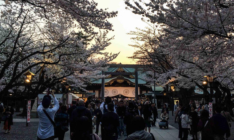 yasukuni ciliegi, yasukuni tokyo,